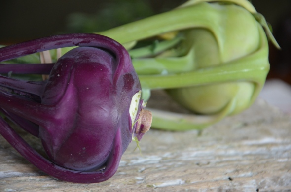Kohlrabi from Siena Farms in Sudbury, MA